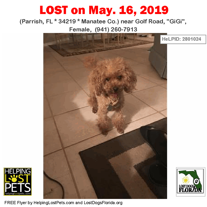 Pin by Lost Dogs Florida on Lost Dogs Losing a dog, Dogs