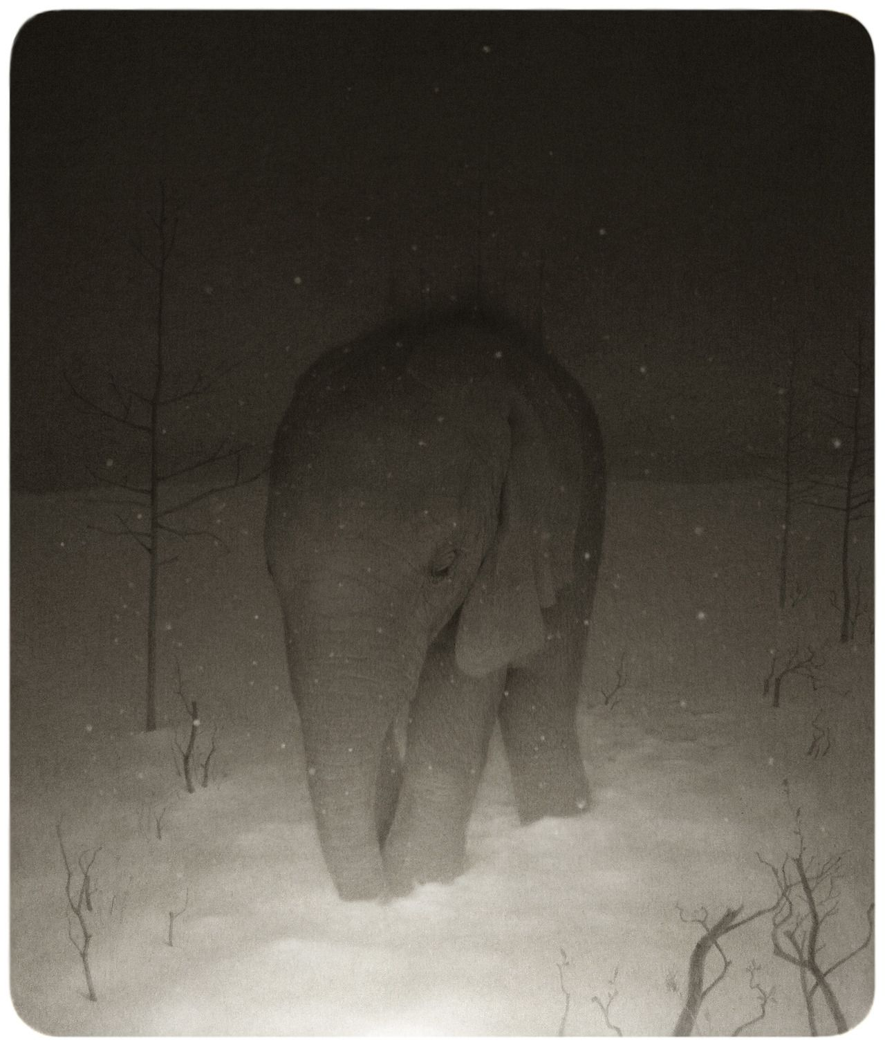 baby elephant snow drawing