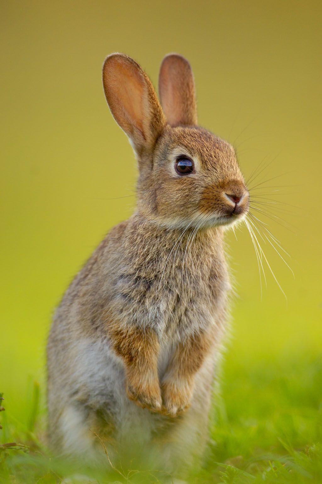 Wild Rabbit Photo Lapin Bebes Animaux Mignons