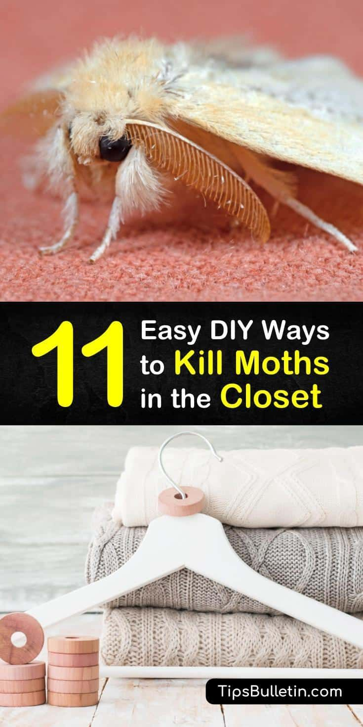 11 Easy Diy Ways To Kill Moths In The Closet In 2020 Diy Bug Spray Diy Household Cleaners Repellents