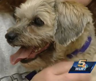 A microchip helped reunite a dog and her owner after seven long years of separation.
