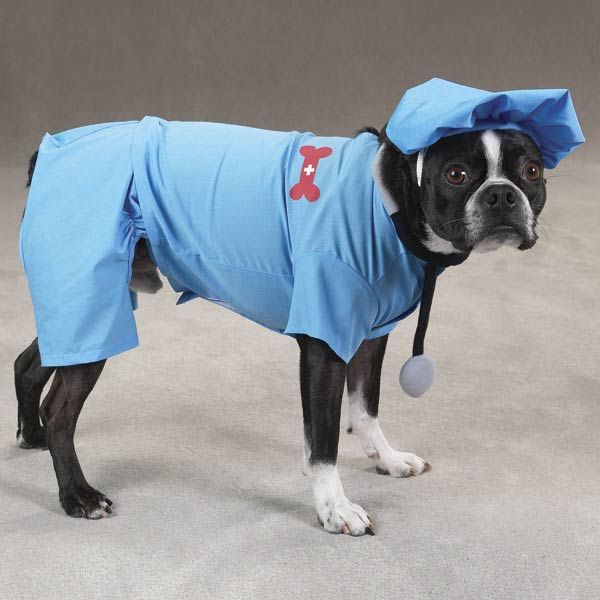 Dog Costumes Dog Halloween Costumes Dog Doctor Fancy Dog Collars