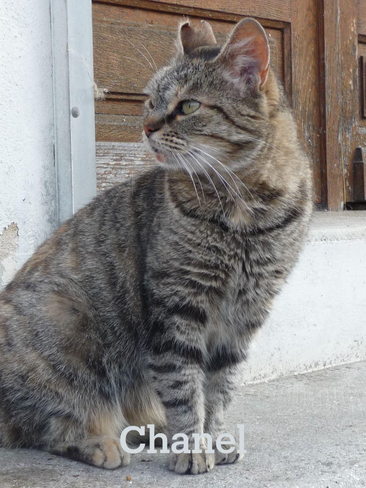 Liste des chats à adopter