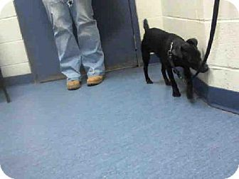 Roo Patterdale Terrier Wphs Pittsburgh Pa Pittsburgh Pa