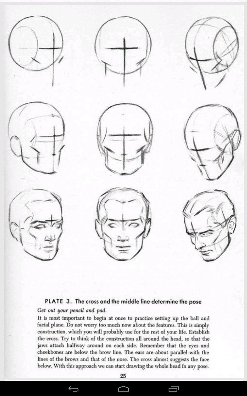 Pin De Francisco Cabeza En Dibujo Cabeza Dibujos Figura Humana Dibujo Anatomia Humana Ilustracion Paso A Paso