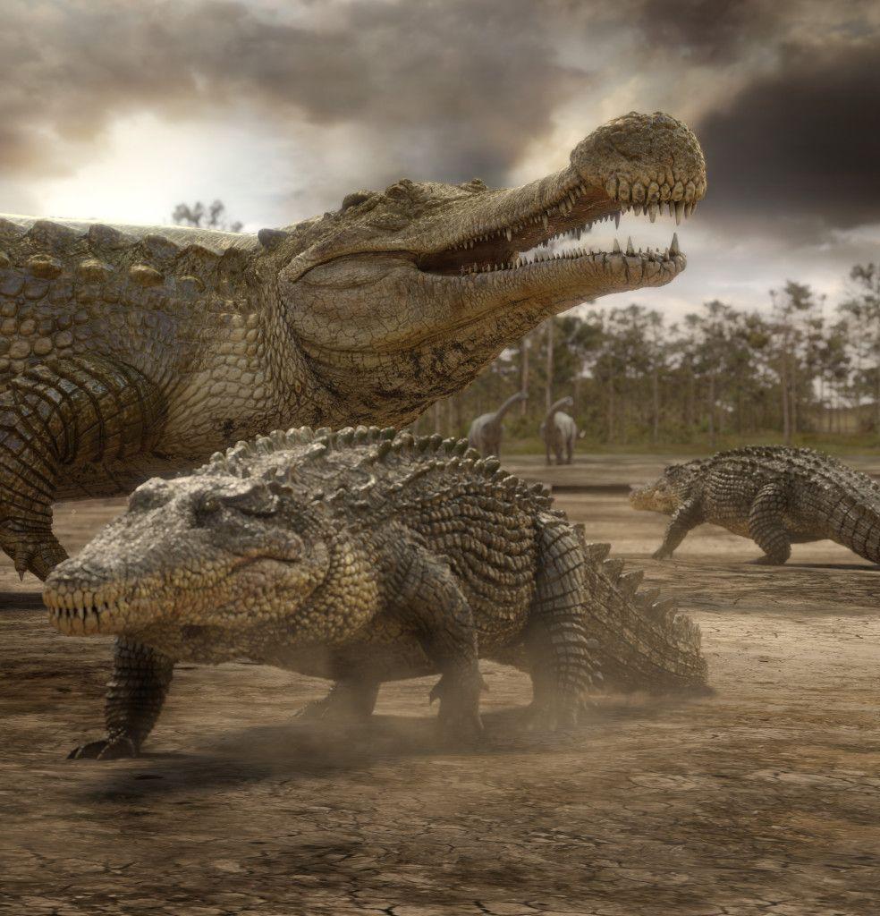 Sarcosuchus imperator | Prehistoric Park | Pinterest ...
