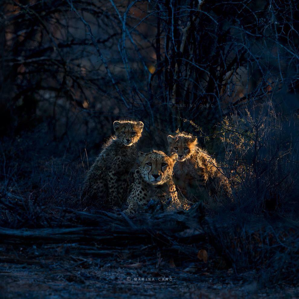 Marina Cano Wildlife Photographer- Awesome Picture