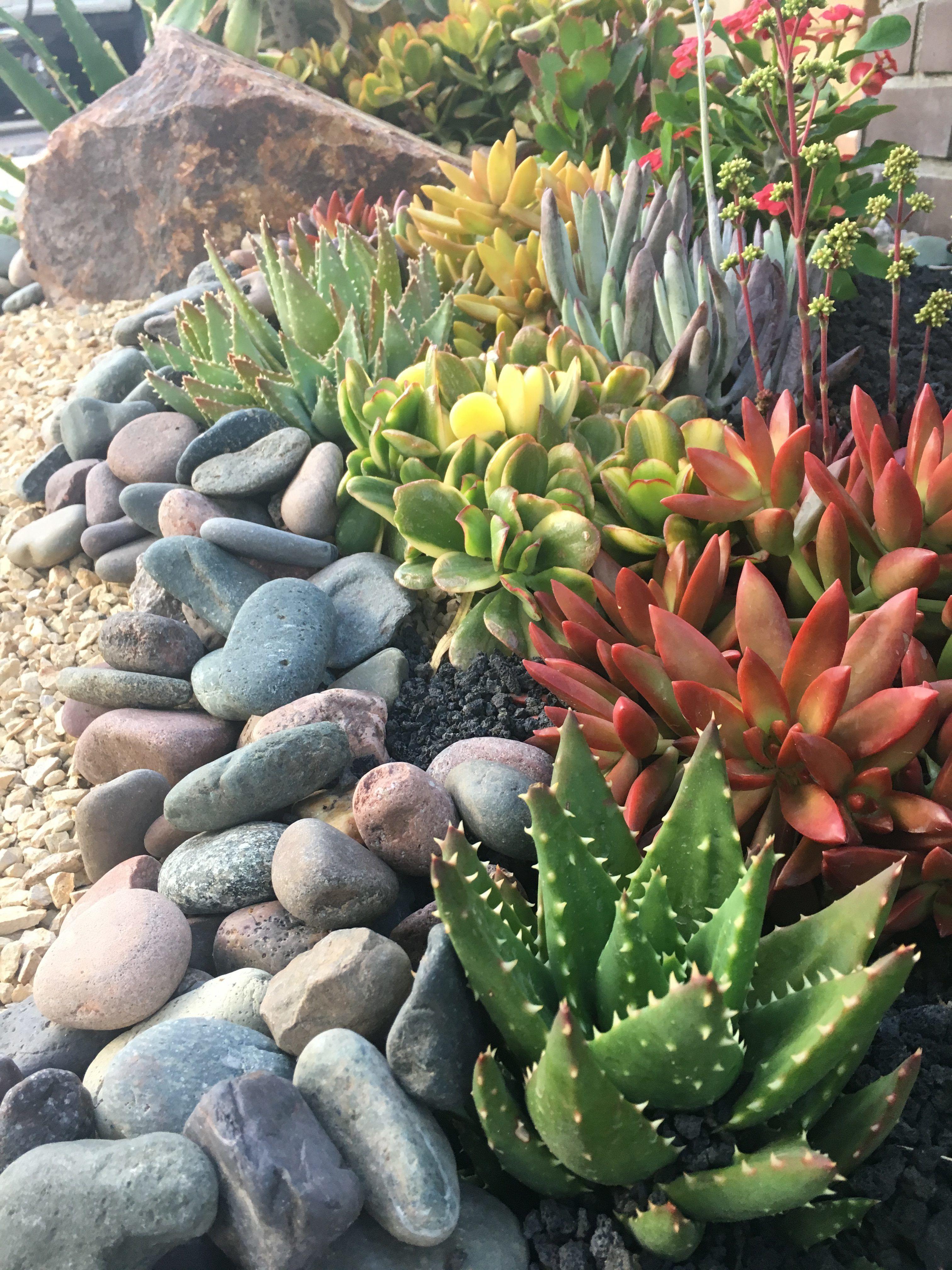 7 Best Rocks For Your Succulent Garden Succulent Garden