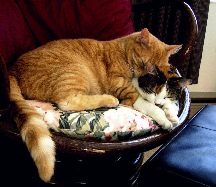 My cute kittens cuddling! kittenscuddling Kittens
