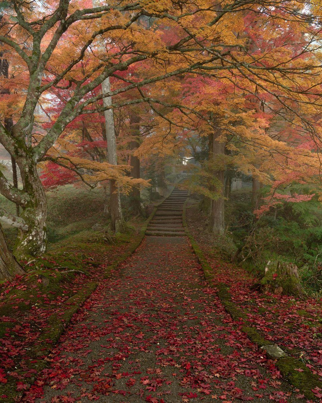 いいね 675件 コメント22件 しんご osaka shingo camera のinstagramアカウント 朝霧 location kyoto japan 好きなのはこういう雰囲気 やっと朝霧の中で撮れたんで country roads autumn leaves road