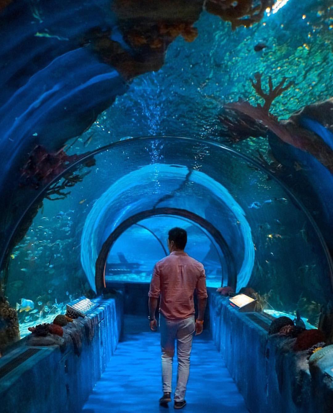 Sealife Aquarium MOA | Sea life artwork, Sealife, Sea life