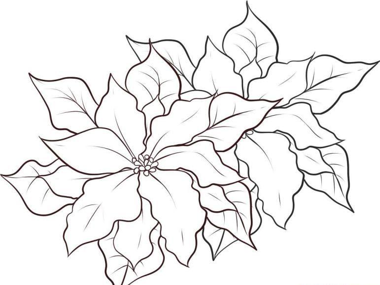 Disegno Stella Di Natale Da Colorare.Stella Di Natale Disegno Da Colorare Cerca Con Google Ricorrenze