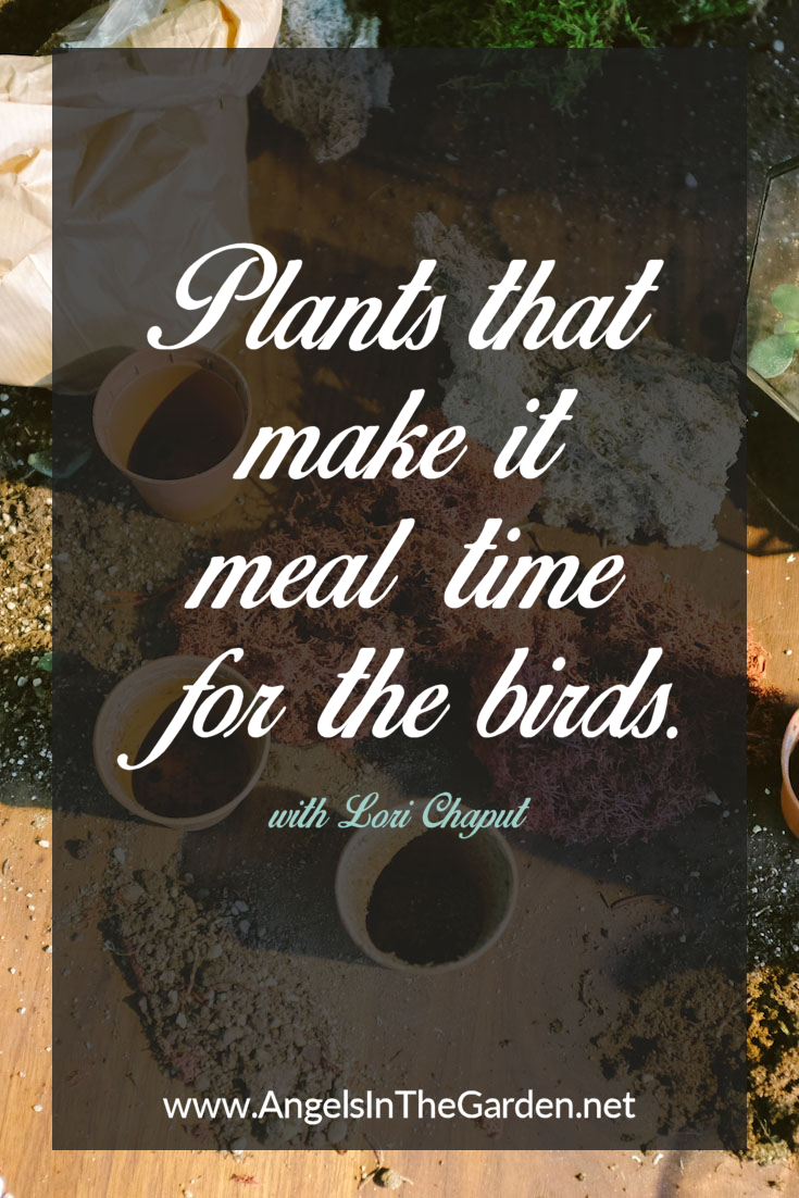 plants that make it meal time for the birds perennials backyard
