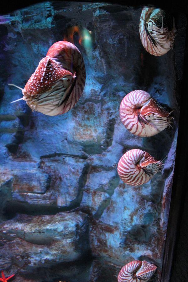 Unterwasser - Krabbenfische by Eric Peter