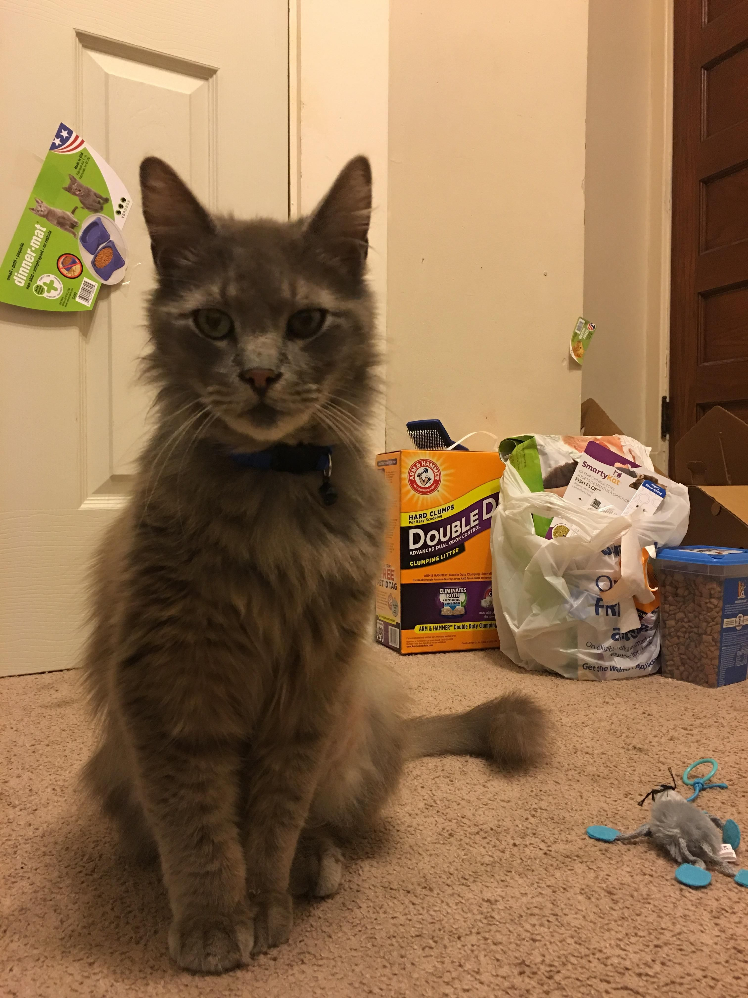 Adopted a cat yesterday. Meet Smokey!