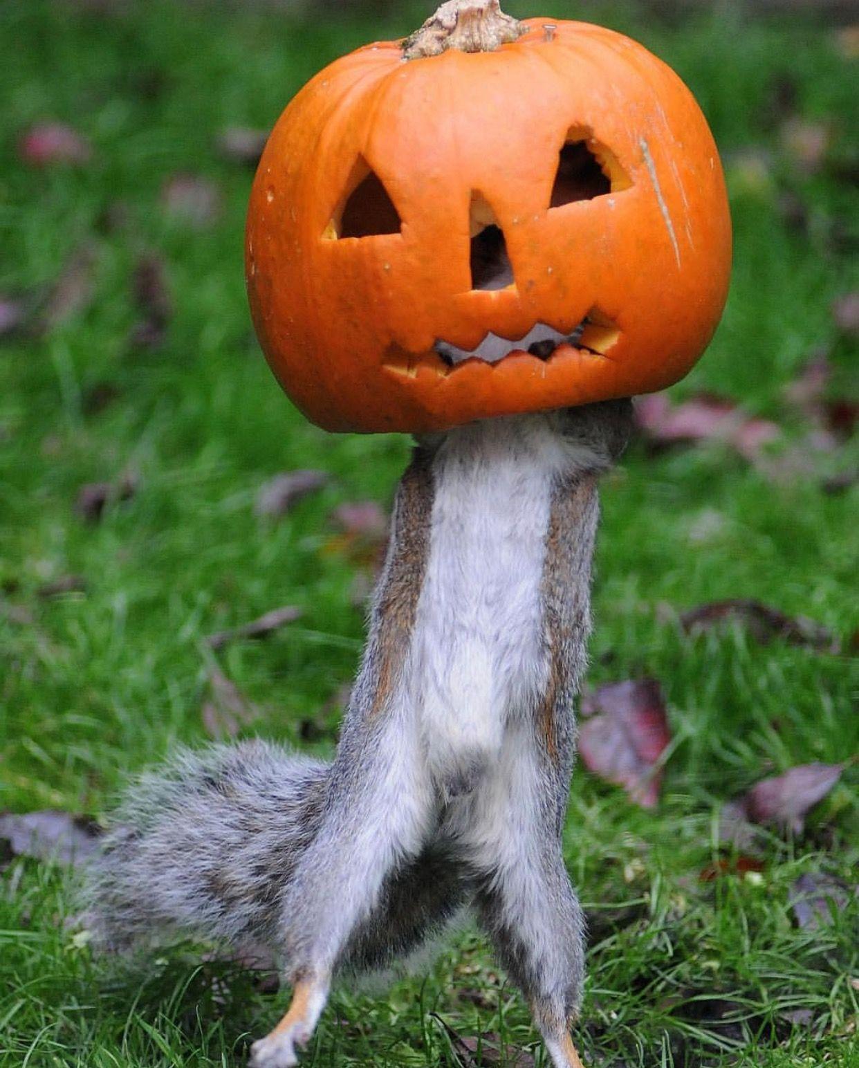 Добрым, картинки хэллоуин прикольные