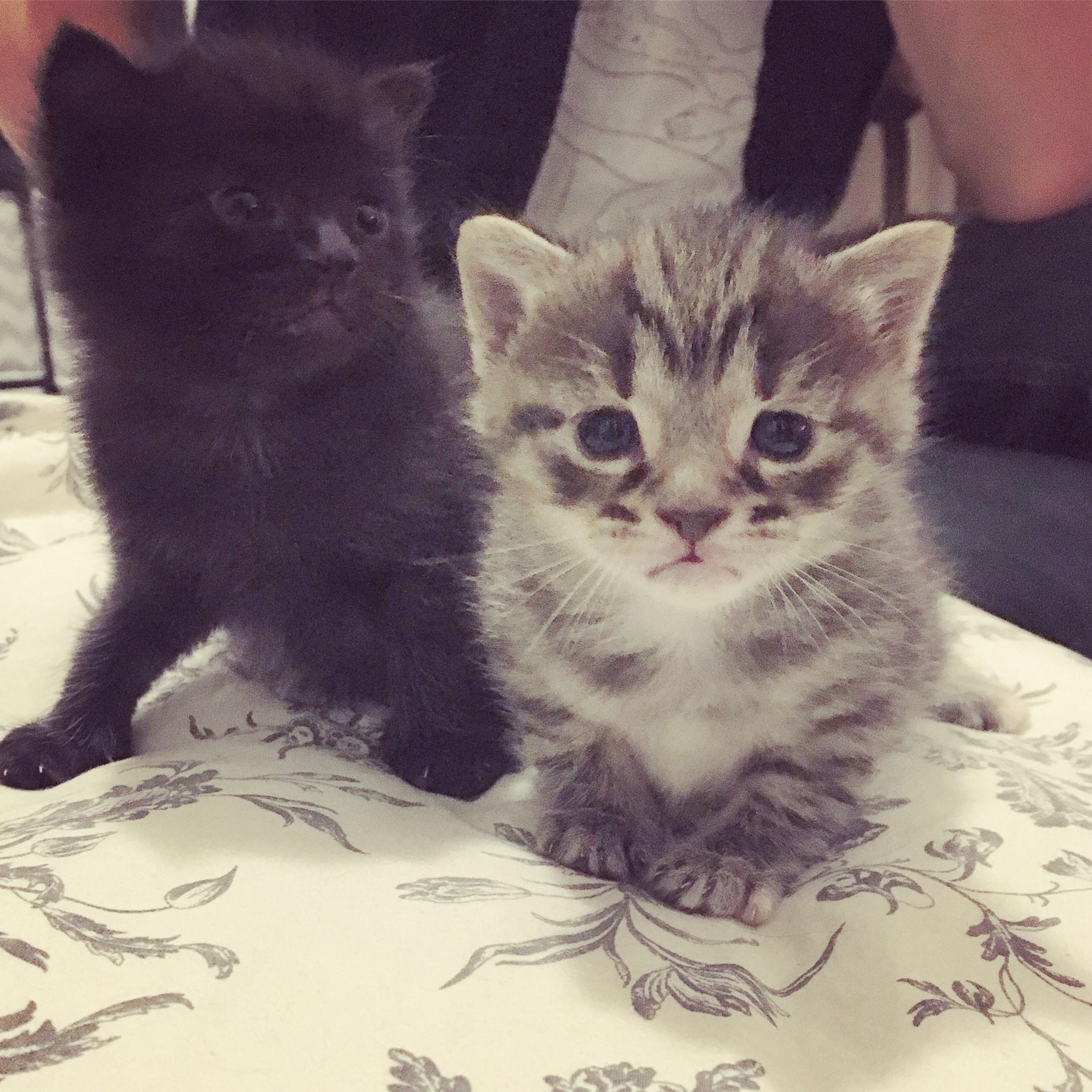 These Little Beans Are 4 Weeks Old Kittens Cutest Kittens Cute Animals