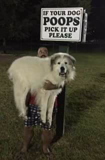 If Your Dog Poops Pick It Up Funny Animal Memes Funny Dogs Funny Dog Memes