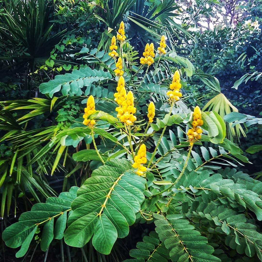 Florida jungle blooms junglevibes
