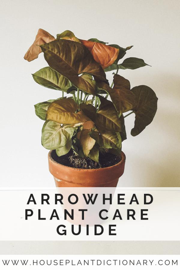 Syngonium Podophyllum Plant Care Houseplant Arrowhead Plant Plants
