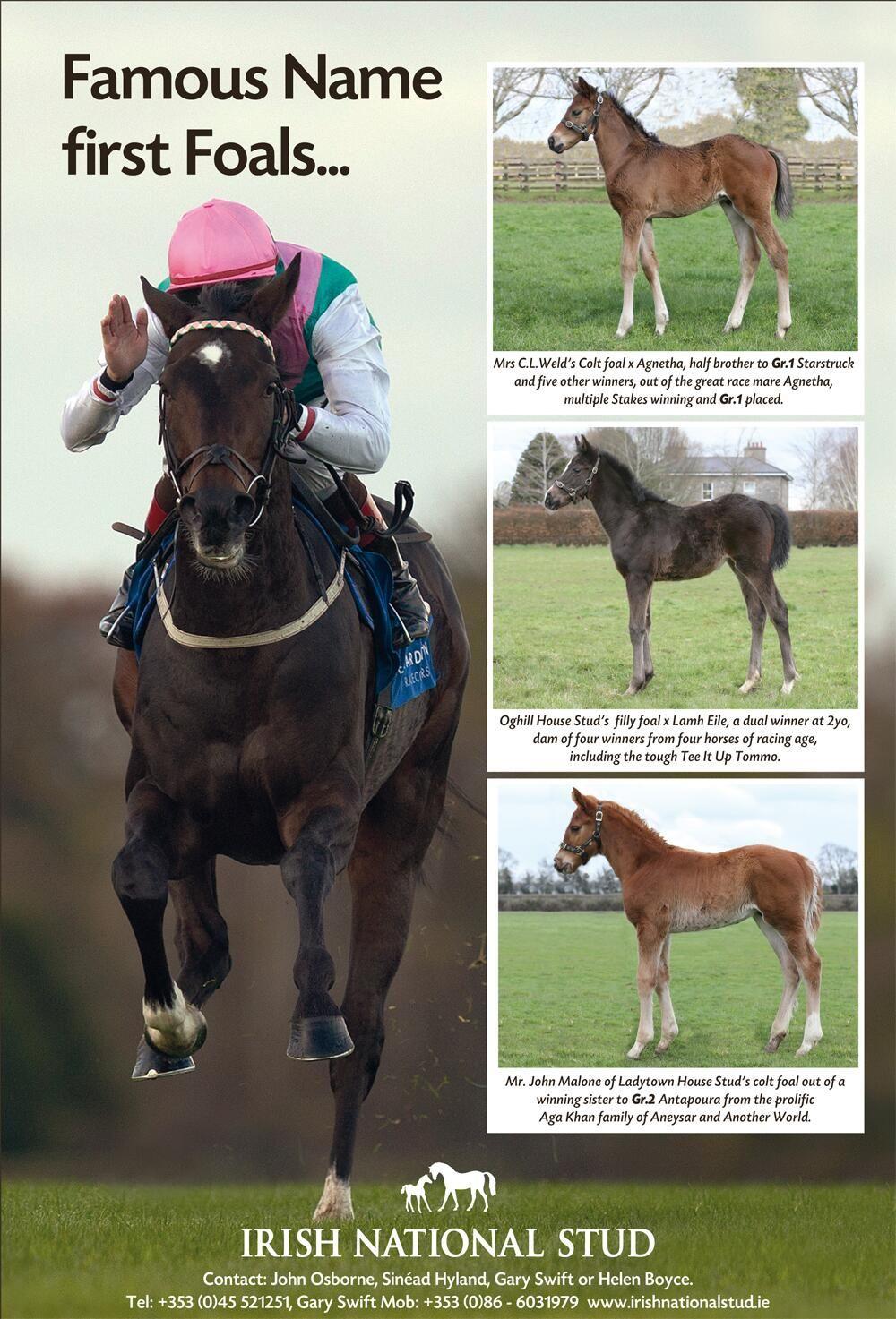 Irish National Stud Irishnatstud On Twitter Horses Foals