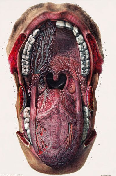 ML19 Vintage 1800\'s Medical Mouth Tongue Surgical Anatomy Poster re ...