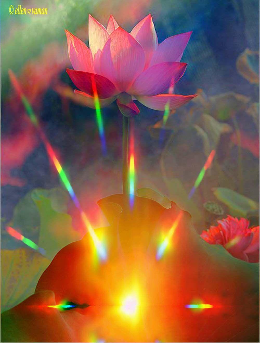 art © e11en♥ vaman  www.facebook.com/ellenvaman 1413 #EllenVaman #DigitalArt #Spirituality #Lotus #Evolution #Beauty #Light #Pinterest