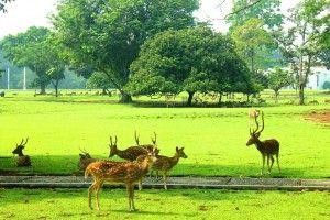 Wisata Yang Dekat Dengan Kebun Raya Bogor