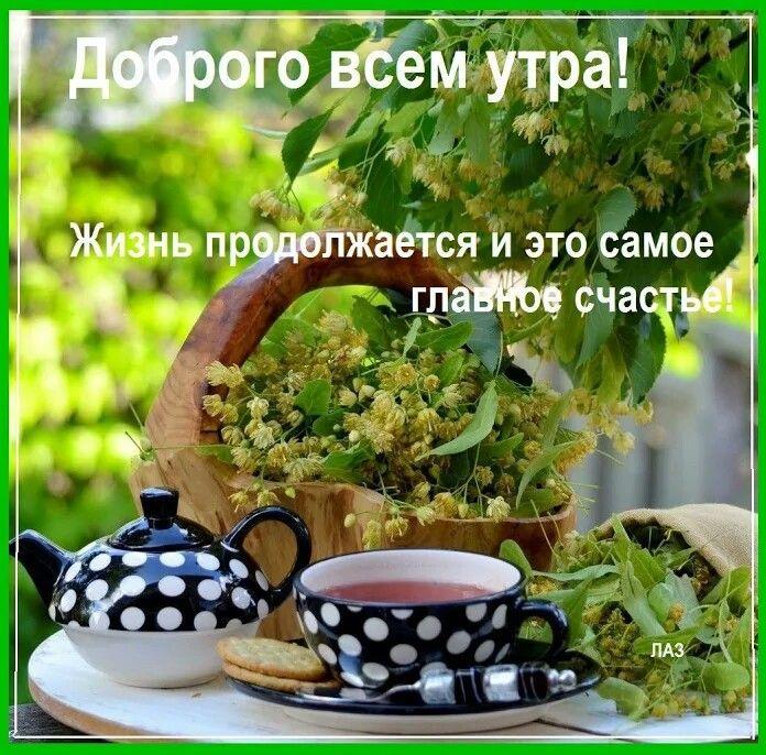 С добрым утром!!! | Утренние цитаты, Доброе утро ...