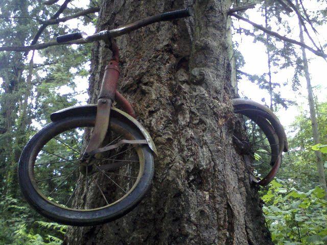 ALLPE Medio Ambiente Blog Medioambiente.org : El árbol que se comió una bicicleta (en 40 años)