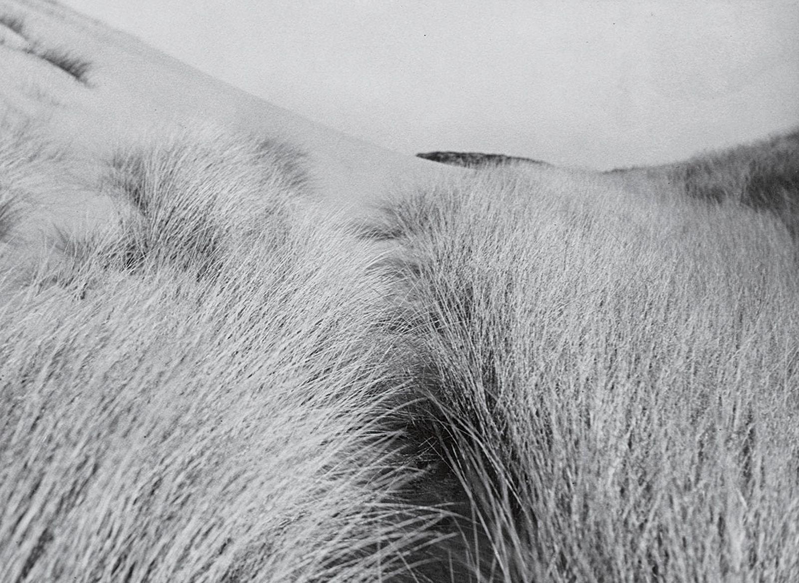 7 idées de Ferrante Ferranti | photographie, bordeaux tourisme, pouillon