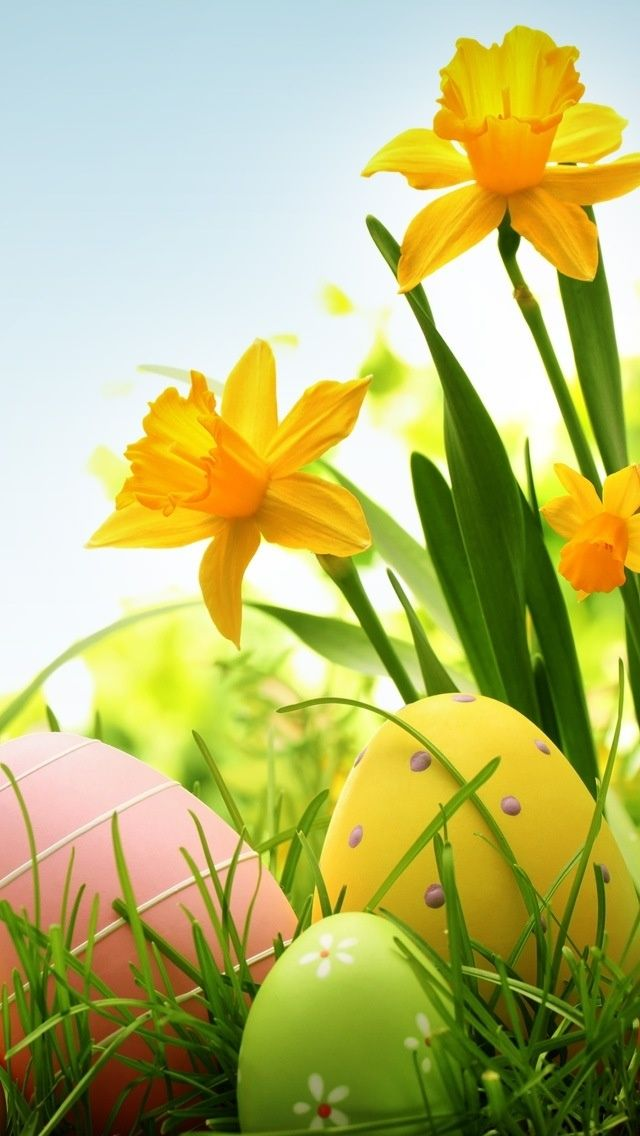 Iphone easter wallpaper bing images easter wallpaper ostern frohe ostern fr hling - Wallpaper ostern ...