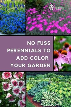Incredible perennial plants and flowers for mixed borders | Pretty Purple Door