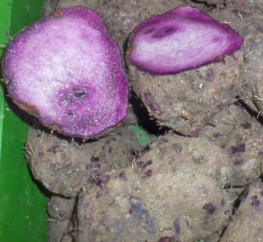 Purple Taro Root Purple Yam Taro Root Yams
