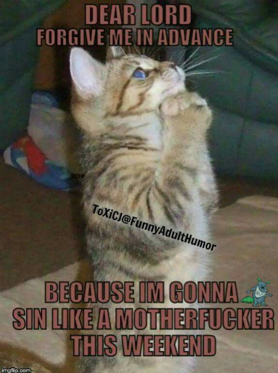 One Unstable Friend With Images Cat Quotes Funny Cat Quotes Cats