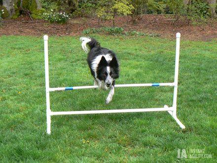 Agility Championship Final Dog Agility Dog Training Training