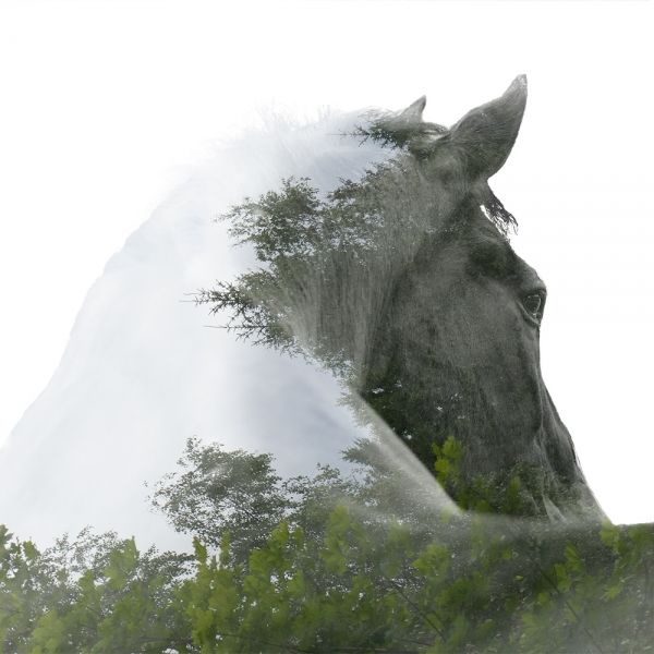 #Double exposure, #Horse, #Quarterhorse, #Blaze                                                                                                                                                                                 More