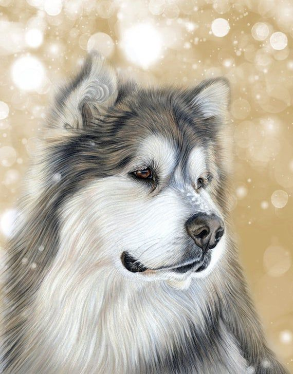5 x Malamute Dog on Old Gold Falling Snow – Festive Greetings Cards – Ideal for Christmas