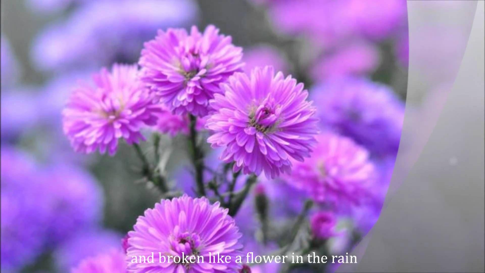 Flower In The Rain By Jaci Velasquez With Lyrics