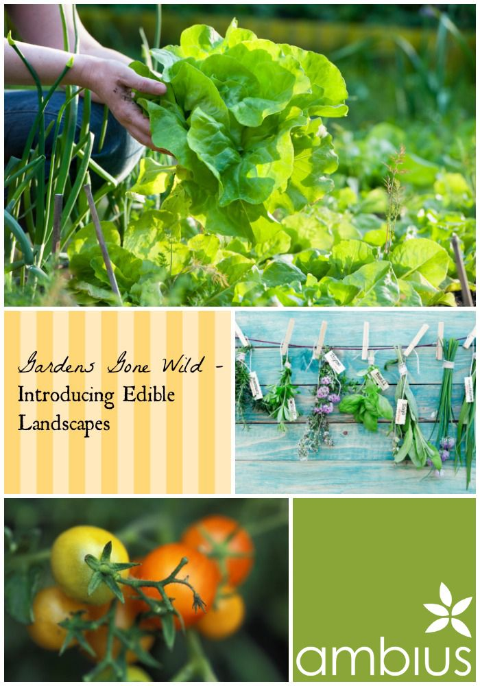 Edible landscapes look gorgeous, but they also provide food, which serves a necessary purpose.