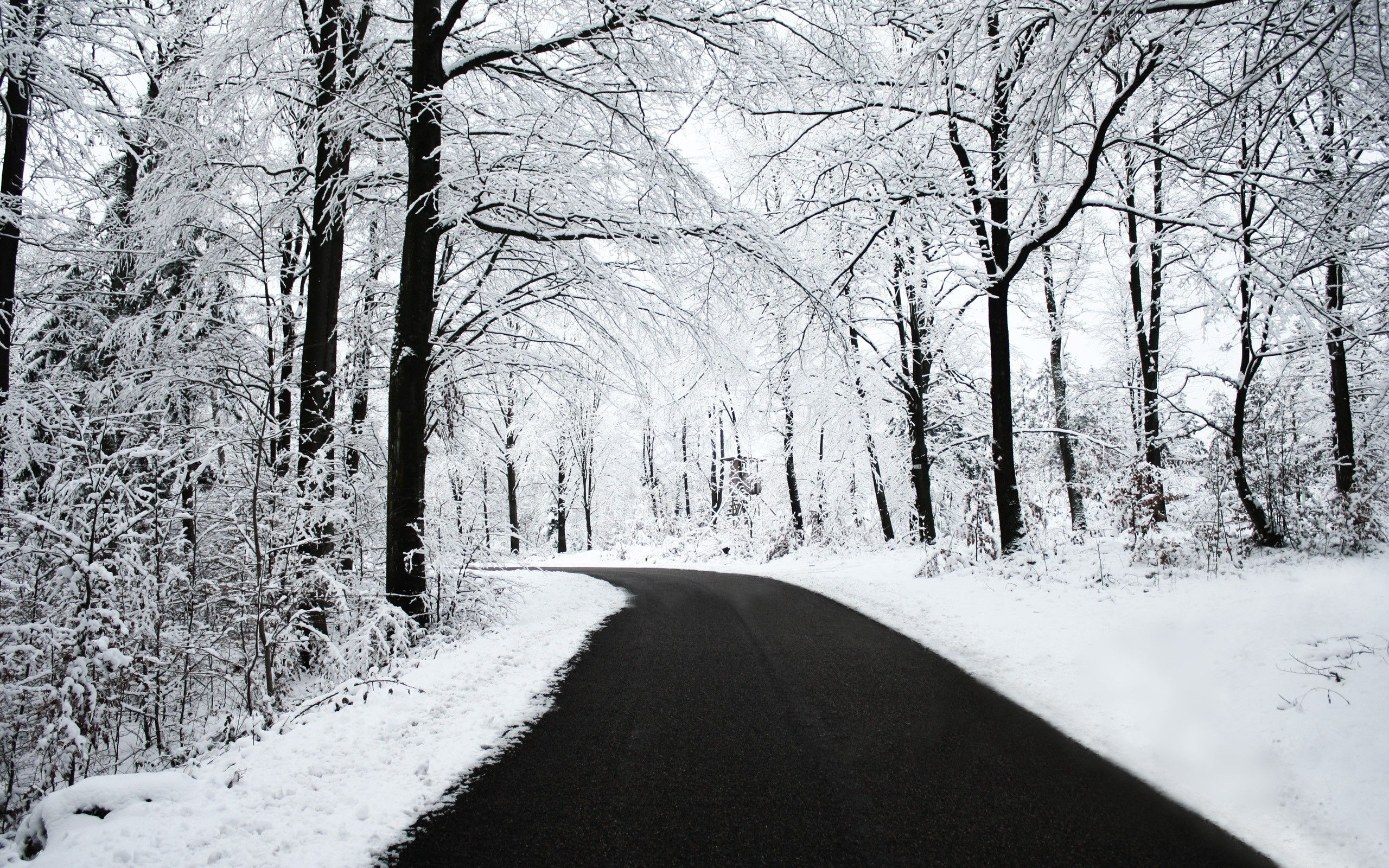 road Snow Black White Winter Forest Nature Wallpapers HD