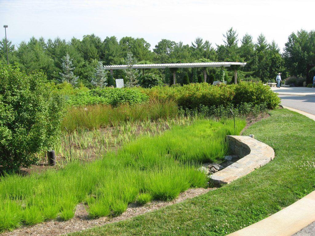 Rain garden at The North Carolina Arboretum in Asheville