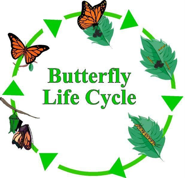 Stages of a Man's Life | Life cycle of a Butterfly | stages of ...