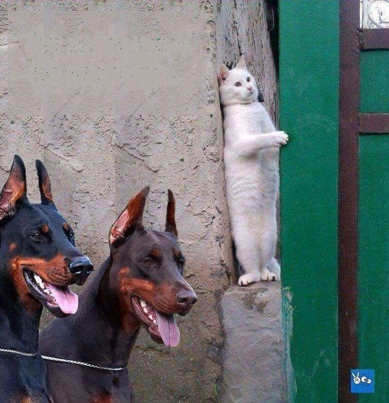 Psbattle Cat Hiding From Two Dogs Cute Funny Animals Funny Animal Pictures Funny Animals