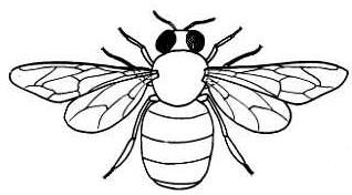 Honey Bee Clip Art Line Drawing Outline