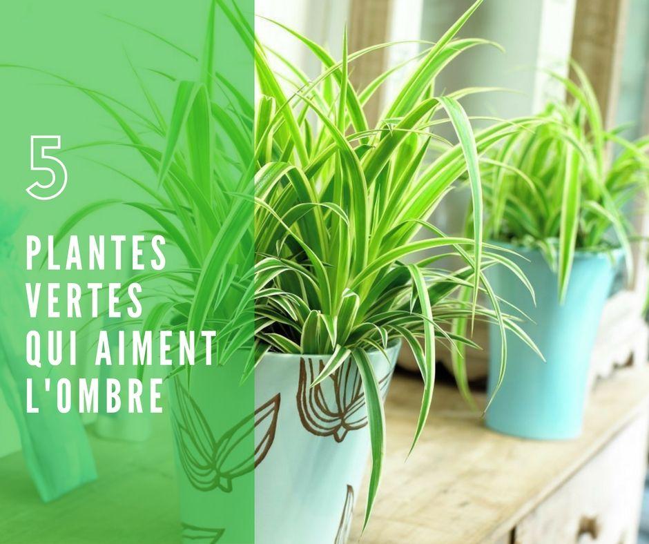 5 Plantes Vertes Qui Aiment L Ombre Et Faciles D Entretien Avec