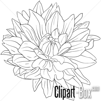 Clipart Dahlia Flower Sketch Style Royalty Free Vector Design Peinture Fleurs Dessin Coloriage