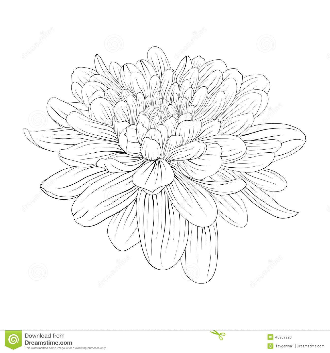 Dahlia Outline Google Search Flower Coloring Pages Flower