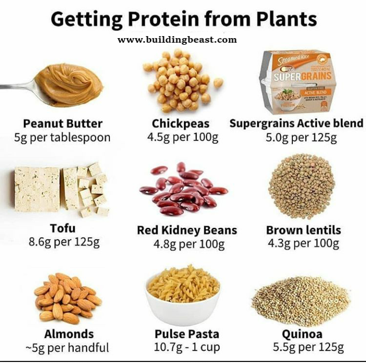 Plant Foods High In Protein Plant Based Protein Diet And Nutrition Food