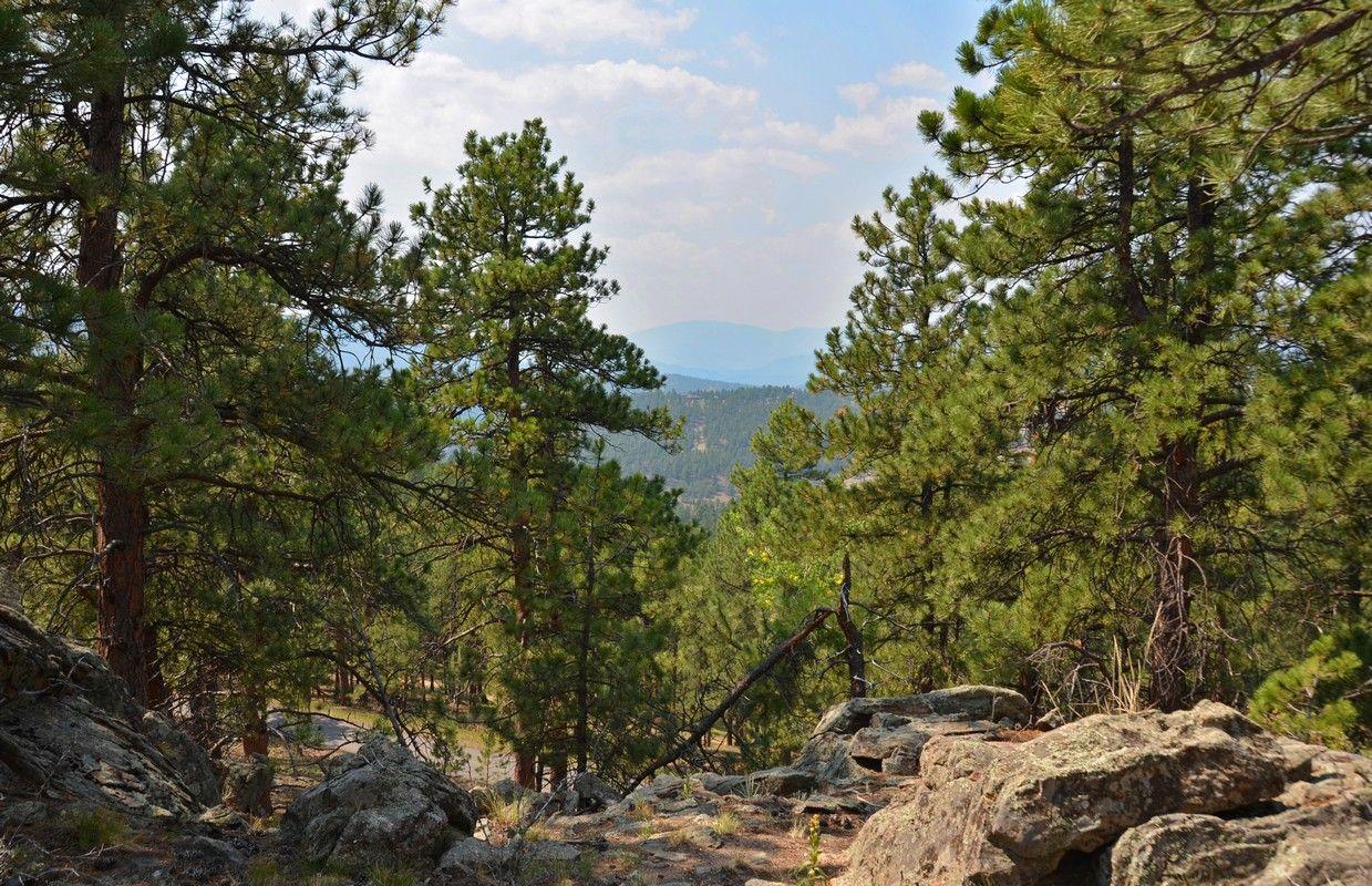 2154 Pine Drop Genesee Colorado  www.AnnLenane.com
